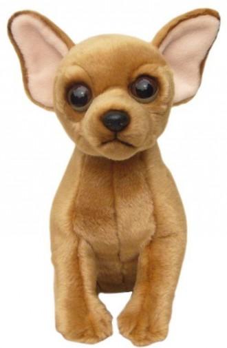 Corfe Bears Gt Faithful Friends Gt Chihuahua Short Coat Soft