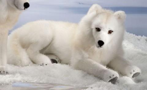 Corfe Bears Gt Kosen Animals Gt Arctic Polar Wolf Lying 41cm