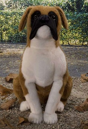 Miniature Boxer Information And Pictures